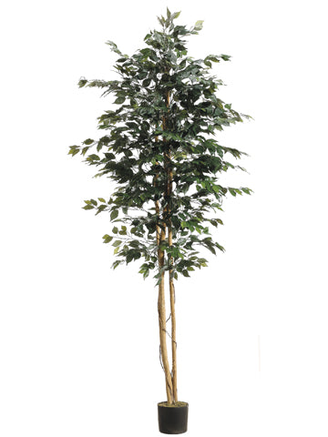 8' Ficus Tree w/1512 Leaves in Pot Green (pack of 2)