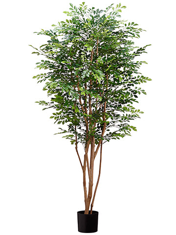 6'Huckleberry Tree in Pot with 5249 Leaves Green (pack of 2)