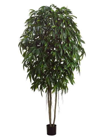 10' Longifolia Tree w/1900 Lvs. in Pot Green (pack of 1)