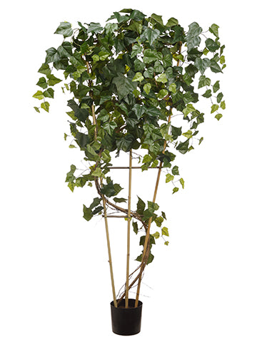 7' Giant Ivy Tree With 480 Leaves in Plastic Nursert Pot Green (pack of 2)