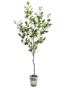 "72"" Laurel Tree in Clay Pot  Green (pack of 1)"