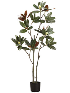 "60"" Magnolia Leaf Tree x2 in Pot Dark Green (pack of 2)"