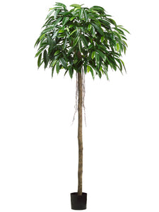 7' Mango Tree w/525 Leaves in Pot Green (pack of 2)