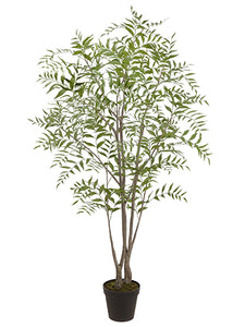 "81"" Mountain Ash Tree in Plastic Nursery Pot Green (pack of 1)"