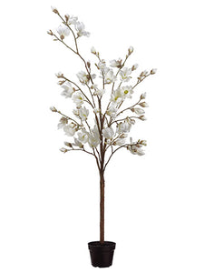 "83"" Magnolia Tree in Pot  White (pack of 1)"