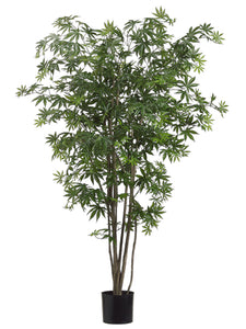 5' Japanese Maple Tree w/572 Leaves in Pot Two Tone Green (pack of 2)