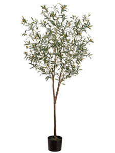 6' Olive Tree in Pot  Green Gray (pack of 2)