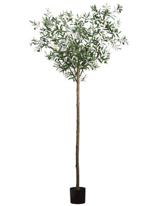 6' Olive Tree with 1500 Leaves in Pot Two Tone Green (pack of 2)