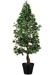 "48"" Cone Shaped Peperomia Tree in Pot Green (pack of 1)"