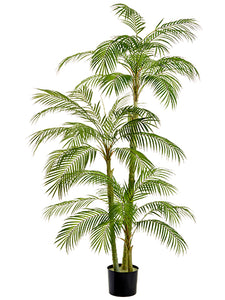"76"" Areca Palm Tree in Plastic Nursery Pot Green (pack of 1)"