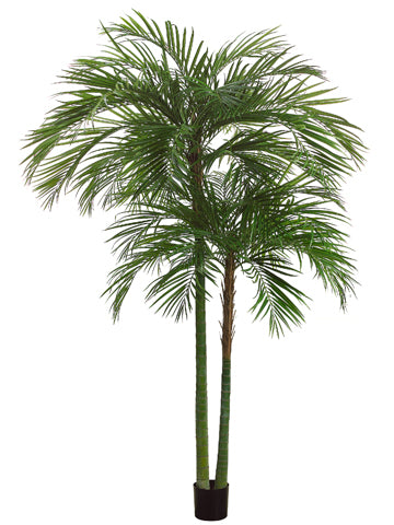 7' Areca Palm Tree x2 with 1692 Leaves in Pot Green (pack of 1)