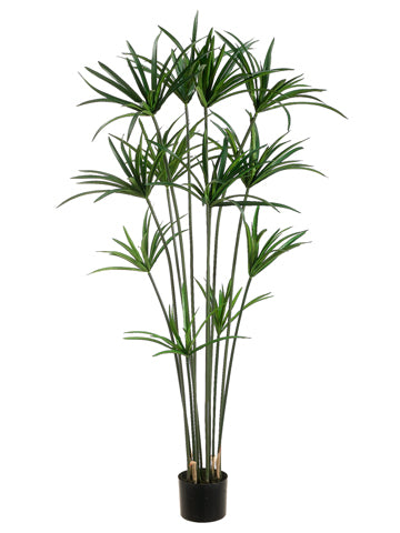 5' Papyrus Plant with 12 Leaves in Pot Green (pack of 2)