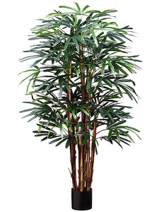 5' Hawaiian Rhapis Tree in Pot with 545 Leaves Green (pack of 2)