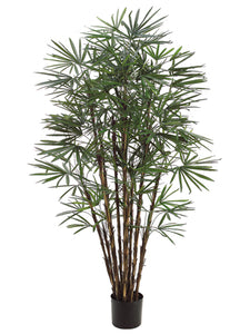 7' Honey Lady Palm Tree x17 with 1062 Leaves in Pot Two Tone Green (pack of 2)