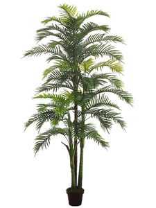 "98"" Hearts Palm x3 with 44 Leaves in Black Plastic Pot Green (pack of 2)"