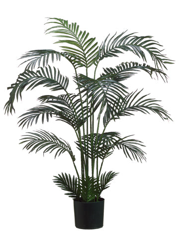 5' Areca Palm Tree x15 in Plastic Pot Green (pack of 2)