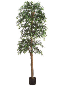 6' Roman Topiary Style Ruscus Tree w/3036 Leaves in Black Plastic Pot Green (pack of 2)