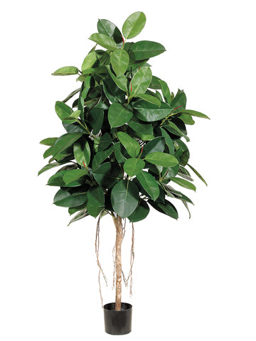 6' Rubber Tree with 174 Leaves in Pot Two Tone Green (pack of 2)