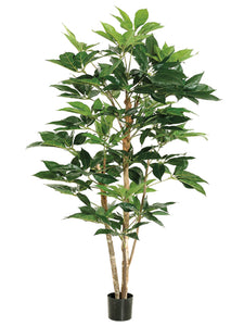 5' Schefflera Tree w/317 Leaves in Pot Green (pack of 2)