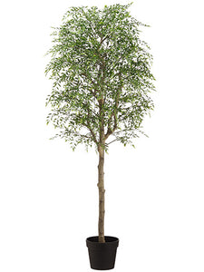 "60"" Wisteria Tree in Plastic Planter Green (pack of 1)"