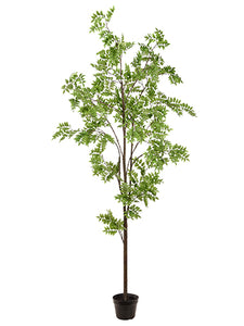 "94"" Wisteria Tree in Pot  Green (pack of 1)"