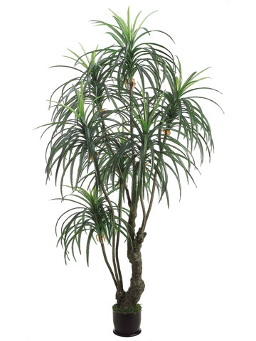 7' Yucca Tree x3 with 392 Leaves in Pot Two Tone Green (pack of 2)