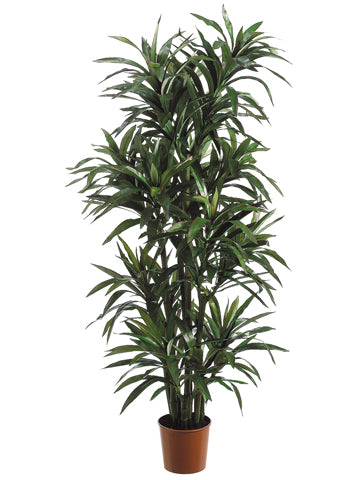 6' Yucca Tree x8 with 406 Leaves in Pot Green Red (pack of 2)