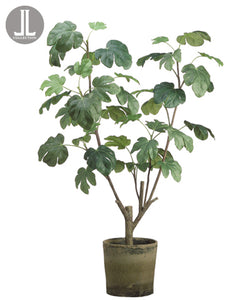 "48"" Fig Plant in Clay Pot  Green (pack of 1)"