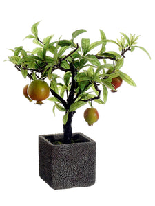 "14"" Pomegranate Tree in Cement Pot Red Green (pack of 2)"