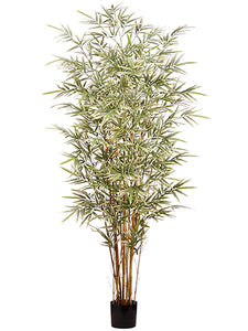 6' Bamboo Tree x7 in Pot With 1760 Leaves Variegated (pack of 1)