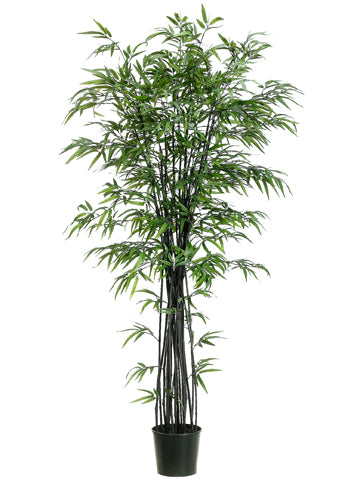6' Black Bamboo Tree w/1736 Lvs. in Black Plastic Pot Black (pack of 1)