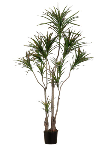 6' Outdoor Dracaena Marginata Tree w/418 Leaves in Plastic Pot Green Burgundy (pack of 1)