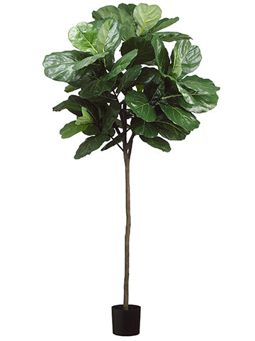 7' Fiddle Leaf Tree With 61 Leaves in Pot Green (pack of 1)