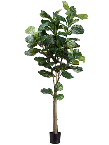 5' Fiddle Tree With 74 Leaves in Pot Green (pack of 1)