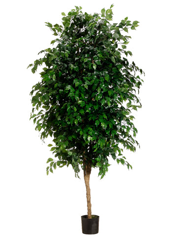 7' Ficus Tree With 3780 Leaves in Pot Green (pack of 1)