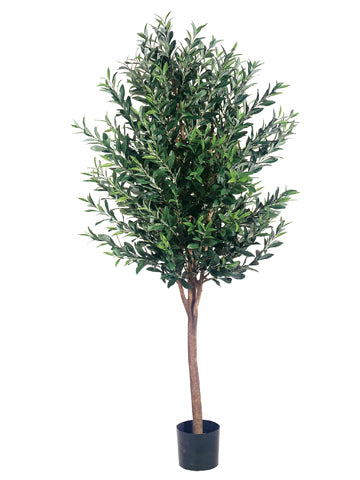 5' Olive Tree w/2560 Leaves in Pot Two Tone Green (pack of 1)