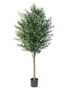 6' Olive Tree With 3200 Leaves in Pot Two Tone Green (pack of 1)