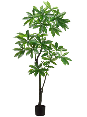 6' EVA Pachira Aquatica Tree  Green (pack of 1)