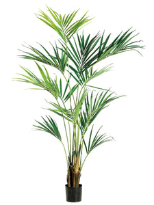 "93"" Kentia Palm Tree in Pot  Light Green (pack of 1)"