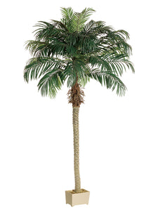 8' Phoenix Palm Tree in Rectangular Plastic Pot  (pack of 1)