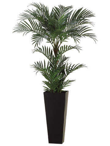 6' Areca Palm Tree in Tall Black Container Green (pack of 1)
