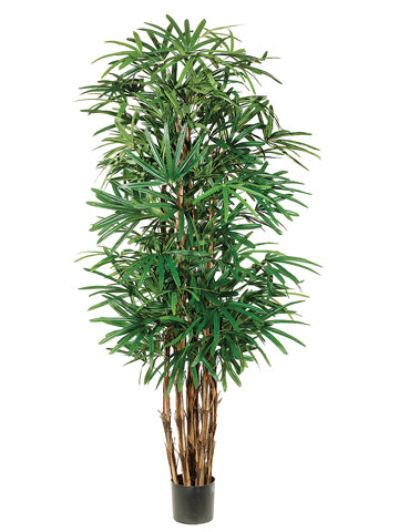 7.5' Lady Palm Tree x7 With 1003 Leaves in Pot Two Tone Green (pack of 1)