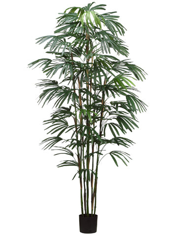 8' Rhapis Palm Tree x9 in Pot  Green (pack of 1)