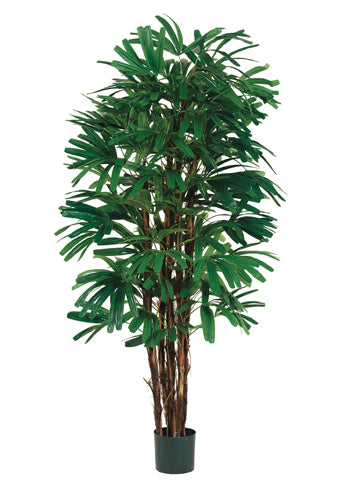 5' Rhapis Tree x5 With 658 Leaves in Pot Two Tone Green (pack of 1)