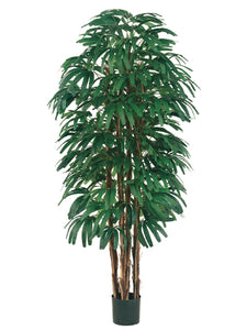 6' Rhapis Tree x6 With 896 Leaves in Pot Two Tone Green (pack of 1)