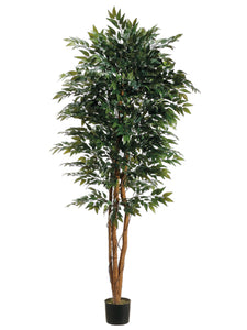 6' Smilax Tree w/Irregular Trunk in Pot Two Tone Green (pack of 1)