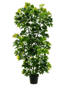 "56"" EVA Schefflera in Black Plastic Pot Green (pack of 1)"