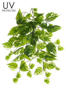 "19"" UV Protected Pothos Bush  Green Cream (pack of 12)"