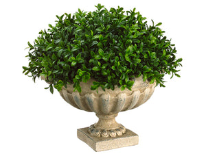 "12""Hx14""Wx14""L Boxwood Dome in Resin Urn Green (pack of 1)"