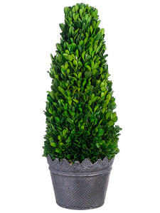 "18""Hx7""Wx7""L Preserved Boxwood Cone Topiary in Tin Planter Green (pack of 1)"